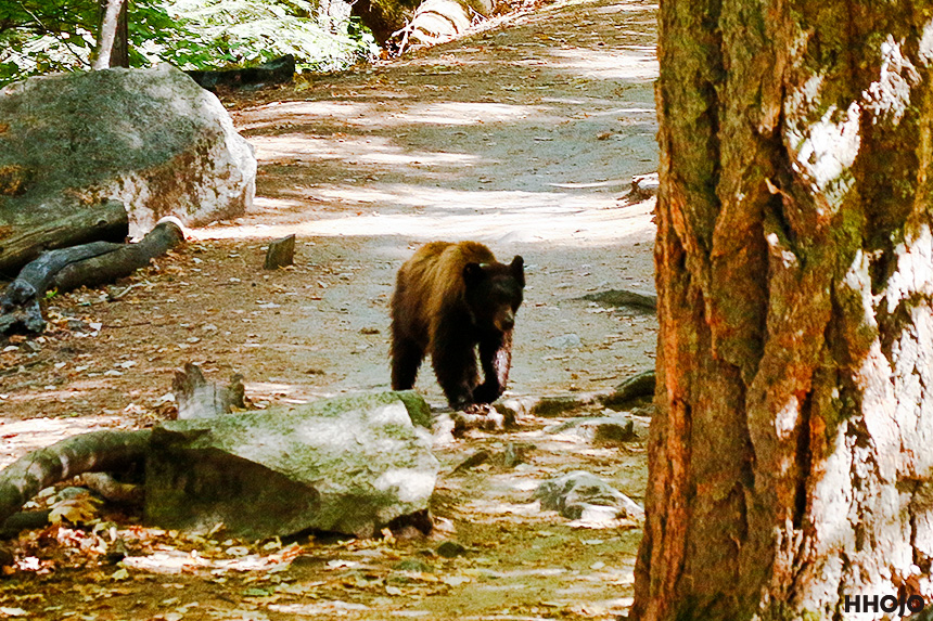 day14_yosemite_bear_img2
