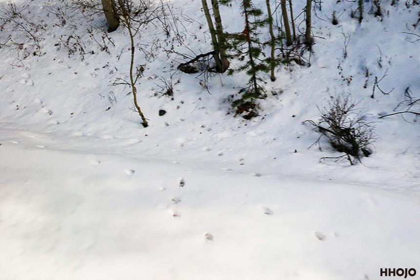 day18_amtrak_fraser_snow_img53
