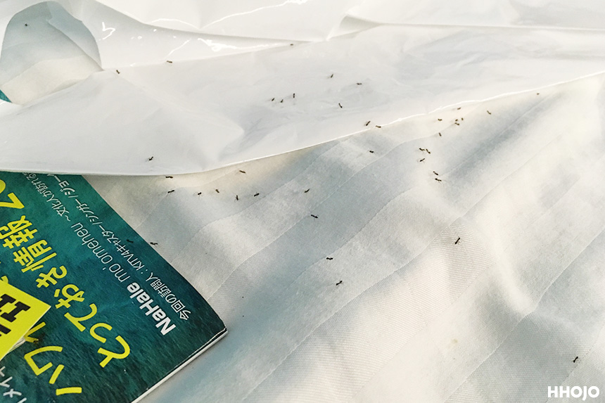 day3_ants_img