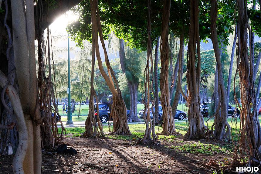 day3_tree_img